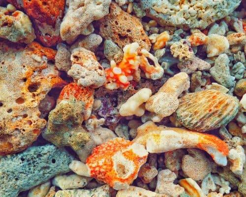 Hikkaduwa Coral Sanctuary