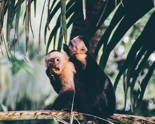Wildlife Central America