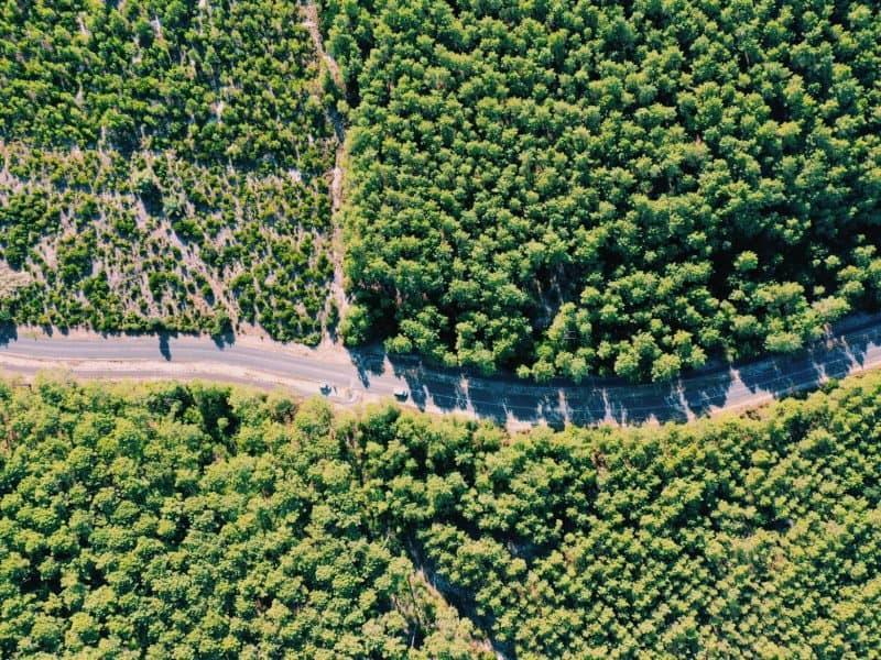 Forests around Lacanau